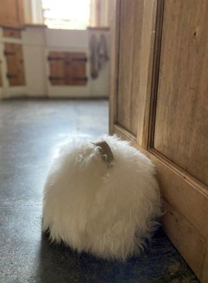Luxe Sheepskin Chairmans Doorstop Ivory