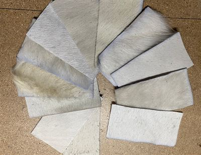 White Cowhide Assortment Panel Pieces 8 cms x 15 cms Pack of 12